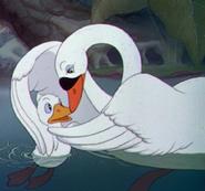 Mother Swan 01