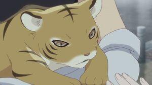 Kisa as Tiger (2)