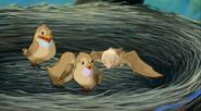 Stellaluna drops in on the birds