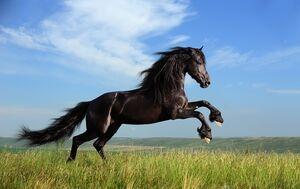 Flicka (Horse)
