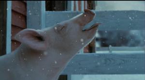 Wilbur's first snow