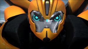 Bumblebee's angry for Rafael