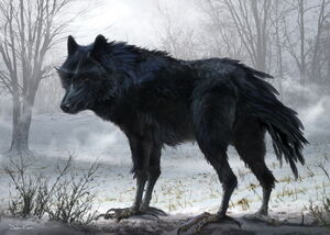 Diaval Wolf Concept