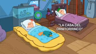 La Casa del Ornitorrinco-Card