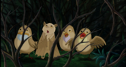 Stellaluna and the birds hiding from the Great White Owl