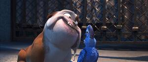 Luiz and Blu
