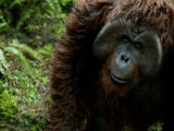 Maurice (Planet of the Apes)