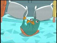 Perry ew