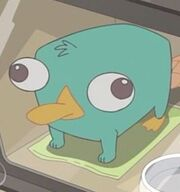 Baby Perry