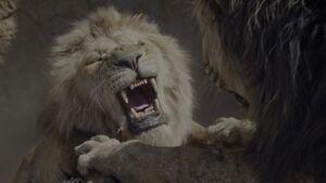 Scar Scratch Mufasa