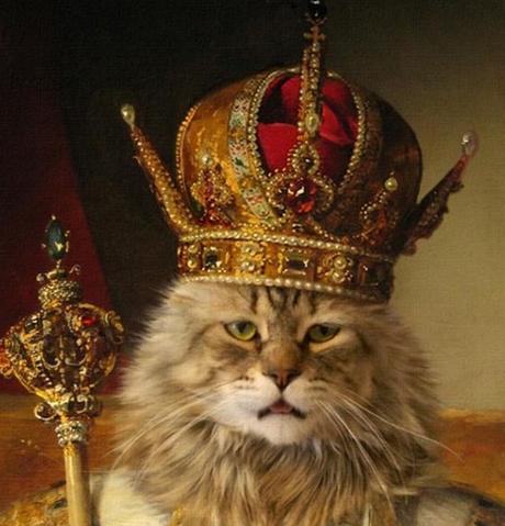 Resultado de imagen de cat king