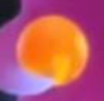 File:Firey Berry.png