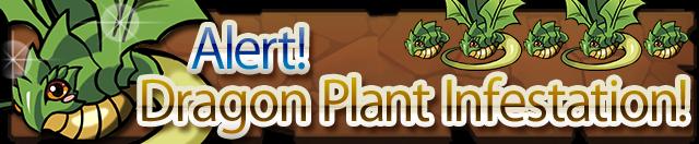 Dragon plant infest