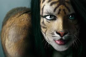 Sokto tigresa