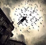 Volando en compañía
