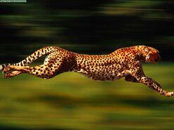 Velocidad nivel guepardo