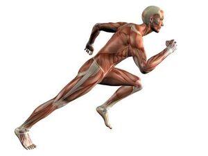 Cuerpo humano de élite