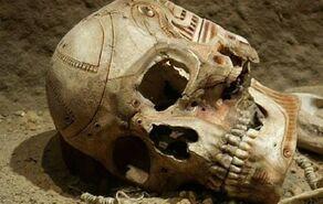 Ciber esqueleto