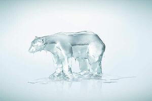 Oso hielo