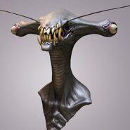Insecto cabeza de martillo
