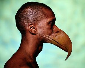 Transformación en ave