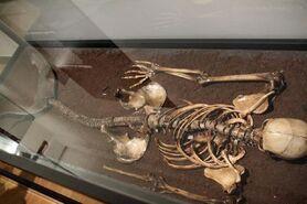 Esqueleto de sirena