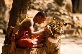 Conexión empática animal 2