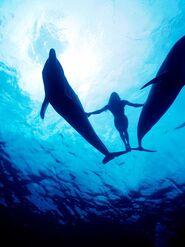Empatía delfines