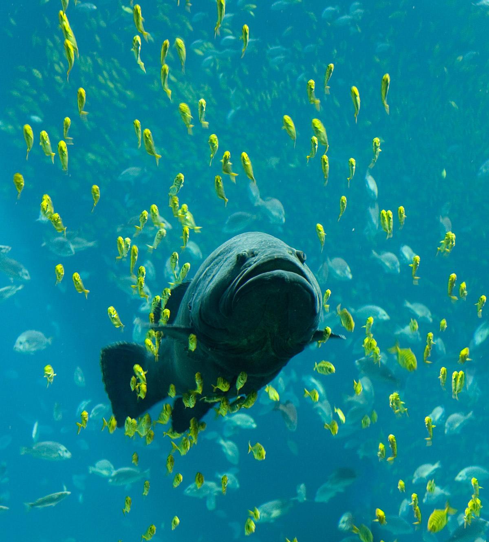 Fish | Paleontology Wiki | FANDOM powered by Wikia