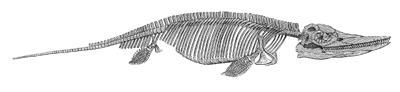 Ichthyosaur Drawing