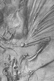 SArchaeopteryxLondon