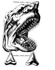 Steno shark