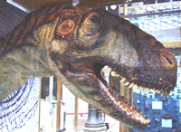 Eustreptospondylus head2