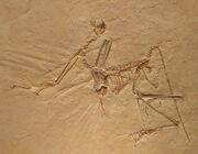 Archaeopteryx bavarica Detail
