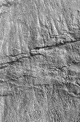 Edmontosaurusskin