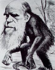 Darwin ape