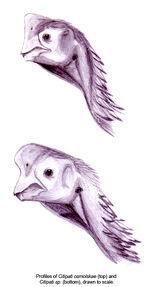 Citipati profiles1