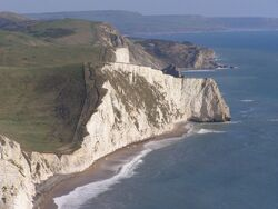 Bats head from white nothe