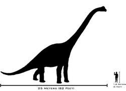 Human-brachiosaurus size comparison
