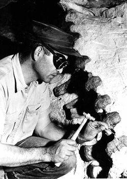 Paleontologist chipping