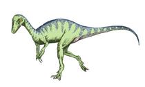 Eopraptor sketch5