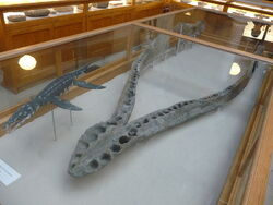 800px-Pliosaurus jaw