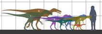 Tyrannosauroidea size 01
