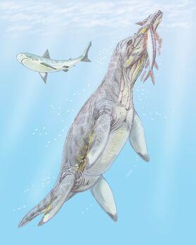 Polyptychodon interr2DB