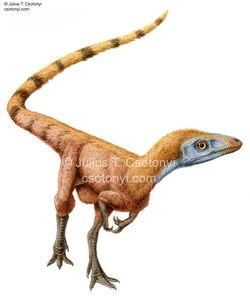 Sinosauropteryx04