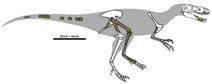 Dryptosaurus remains 01