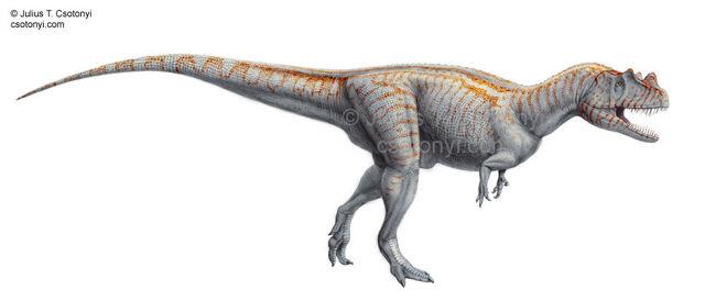 File:Ceratosaurus nasicornis01.jpg