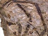 Nephila jurassica