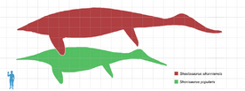 Shonisaurus scale mmartyniuk