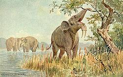 File:250px-Dinotherium.jpg